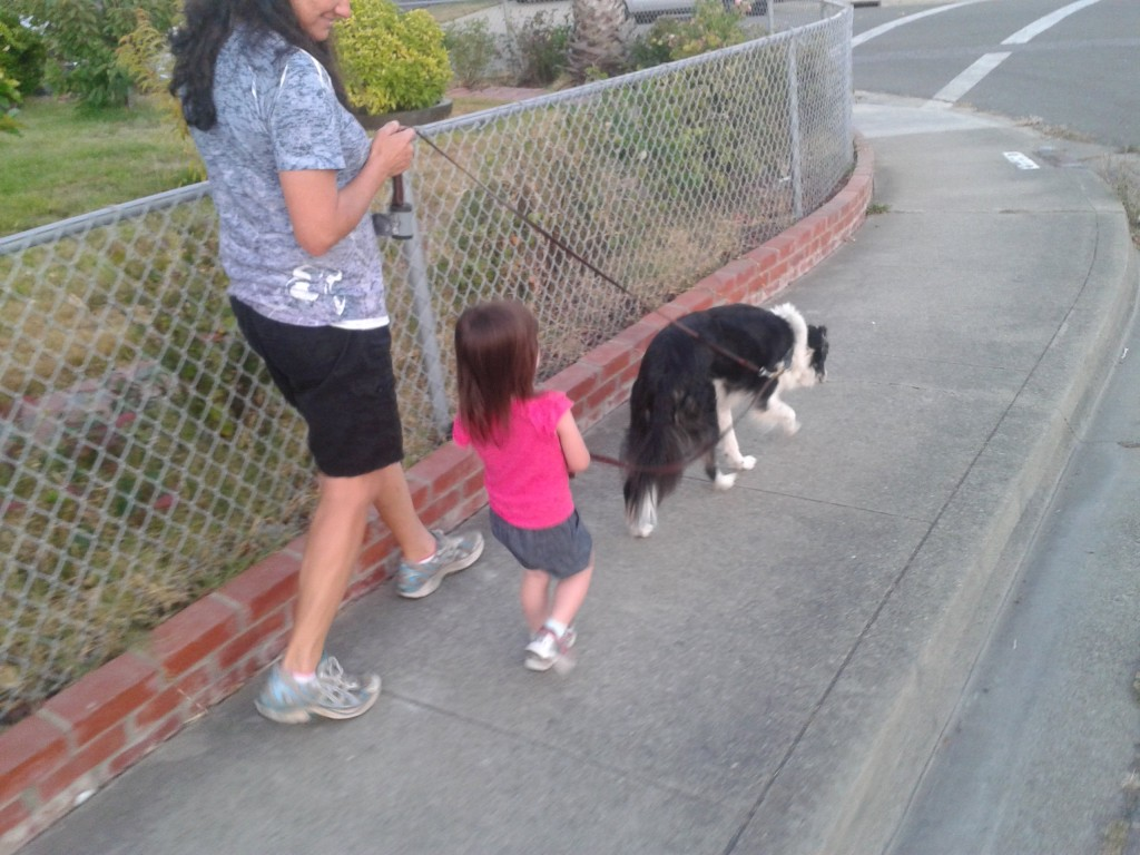 The two-leash system