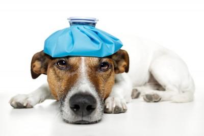 Sick Dog image from 123RF.com